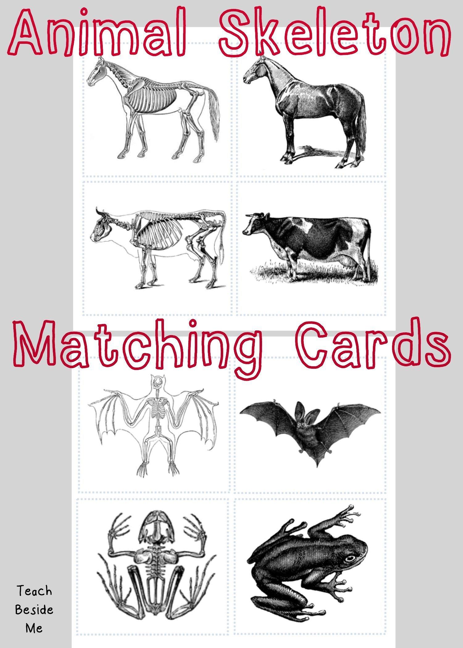 Animal Skeleton Matching Cards   احياء   Animal Skeletons, Animal - Free Printable Animal X Rays