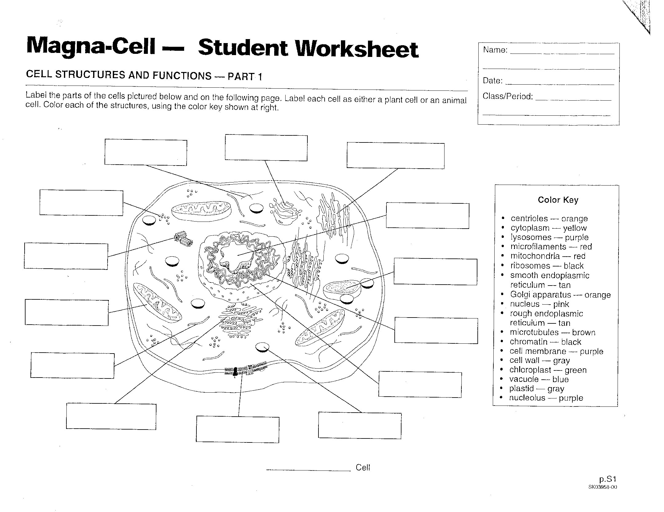 Cells - Mrs. Musto 7Th Grade Life Science - Free Printable Cell Worksheets