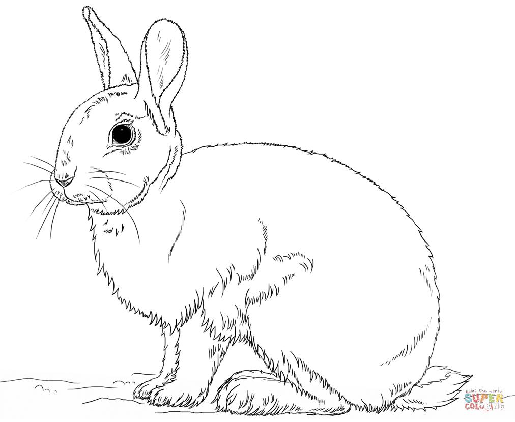 Cute Bunny Rabbit Coloring Page   Free Printable Coloring Pages - Free Printable Bunny Pictures