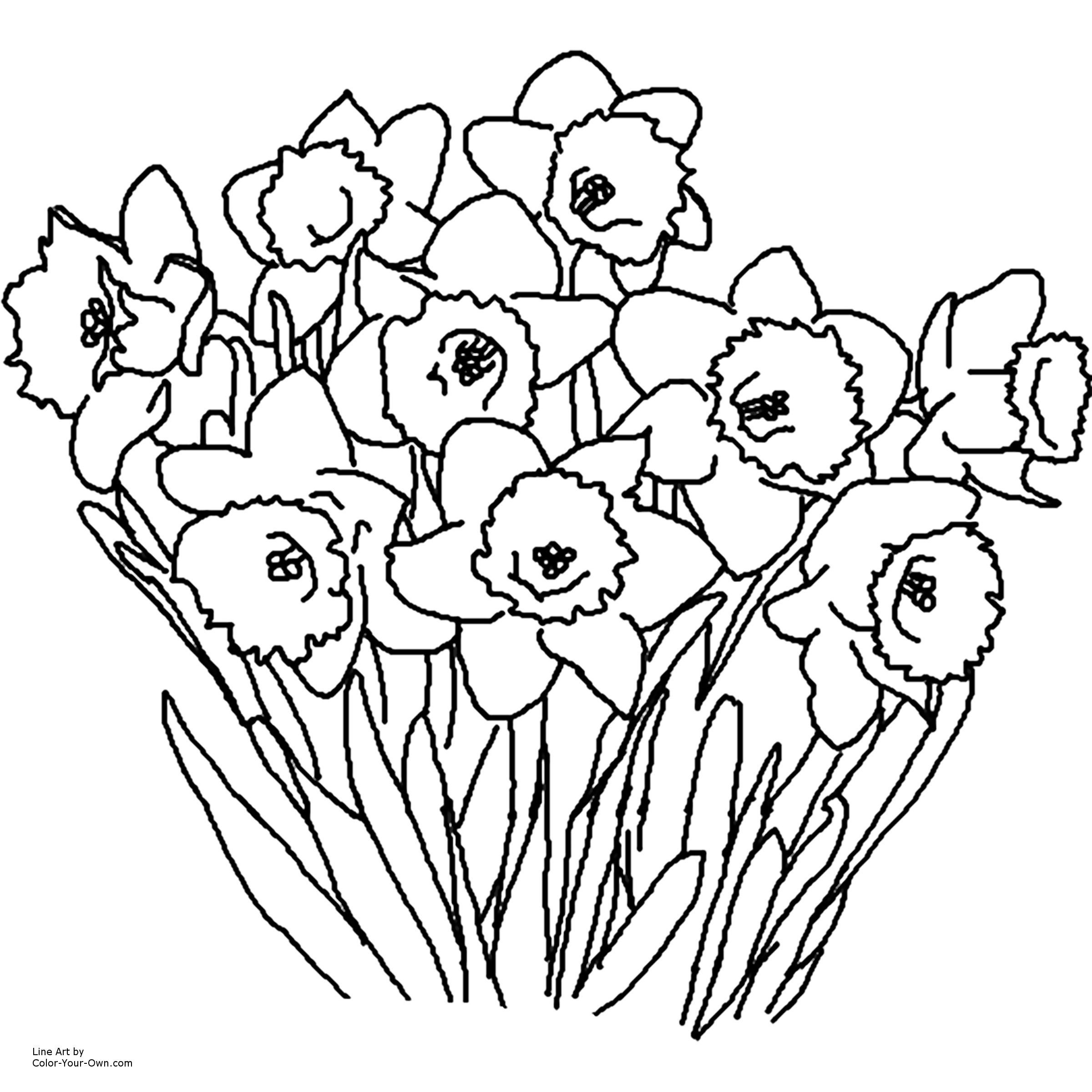 Daffodil Coloring Page. How To Draw A Tiger Lily Stepstep - Free Printable Pictures Of Daffodils