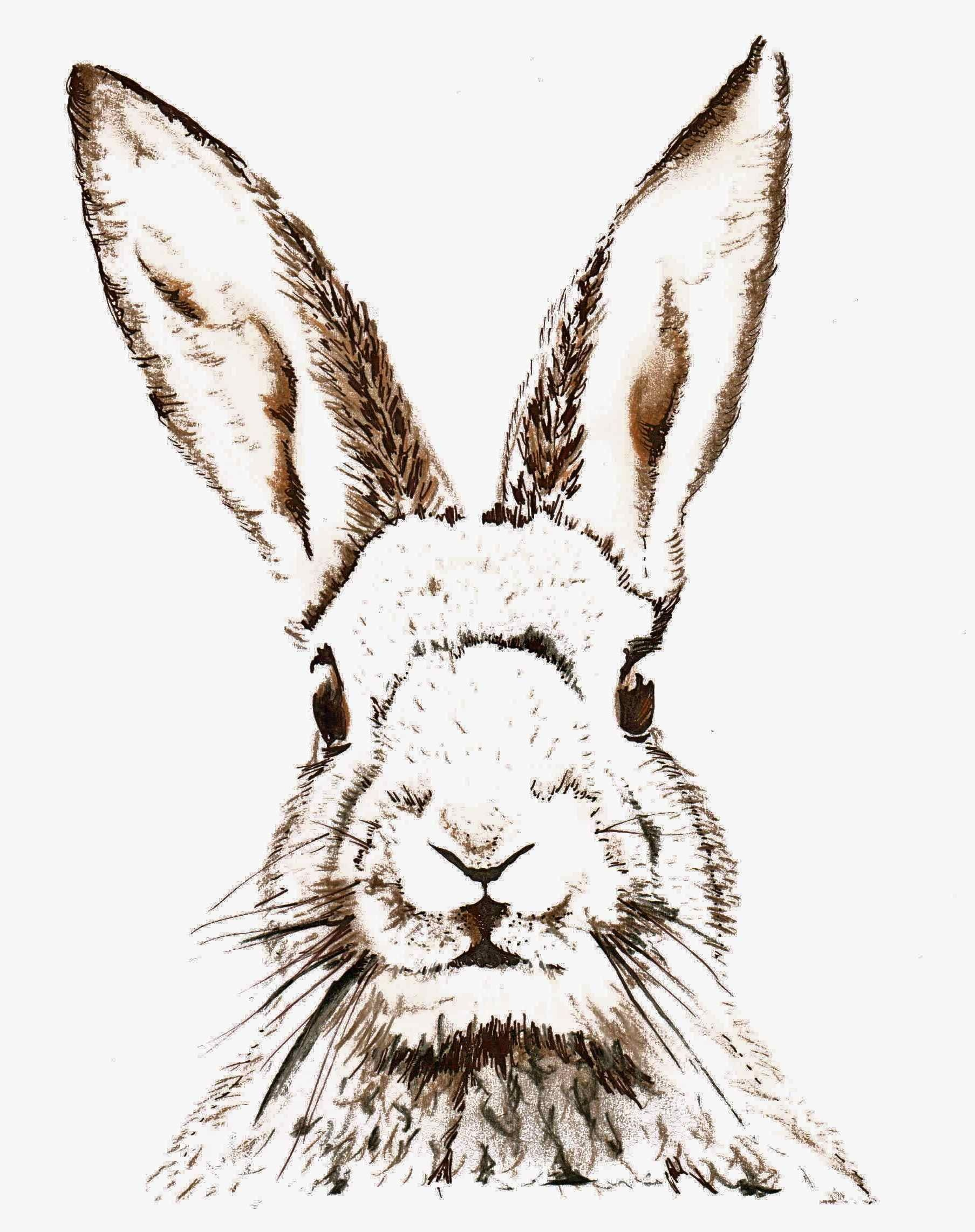 Free Easter Printable & Vintage Clip Art | Free Printables - Free Printable Bunny Pictures