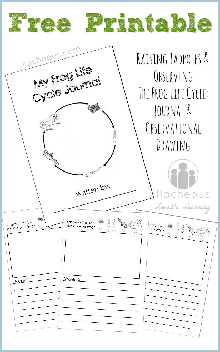 Free Printable Frog Life Cycle Journal | Science Notebooking - Life Cycle Of A Frog Free Printable Book