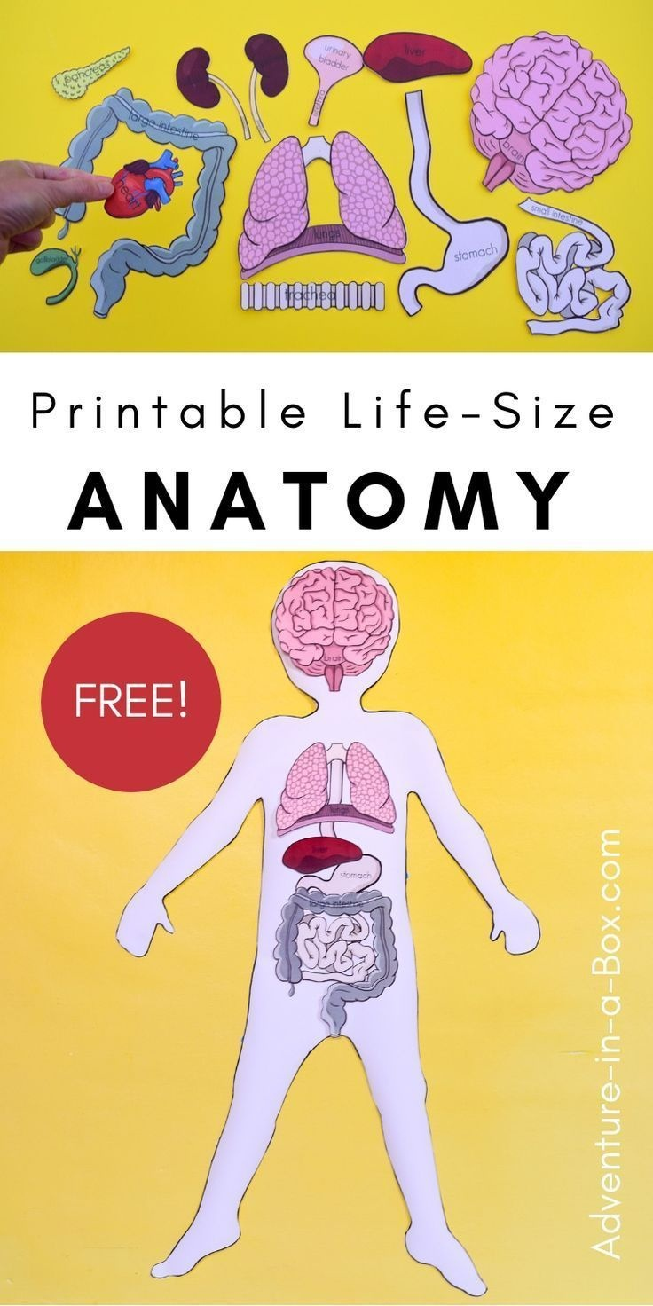 Free Printable Life-Size Organs For Studying Human Body Anatomy With - Free Printable Human Body Template