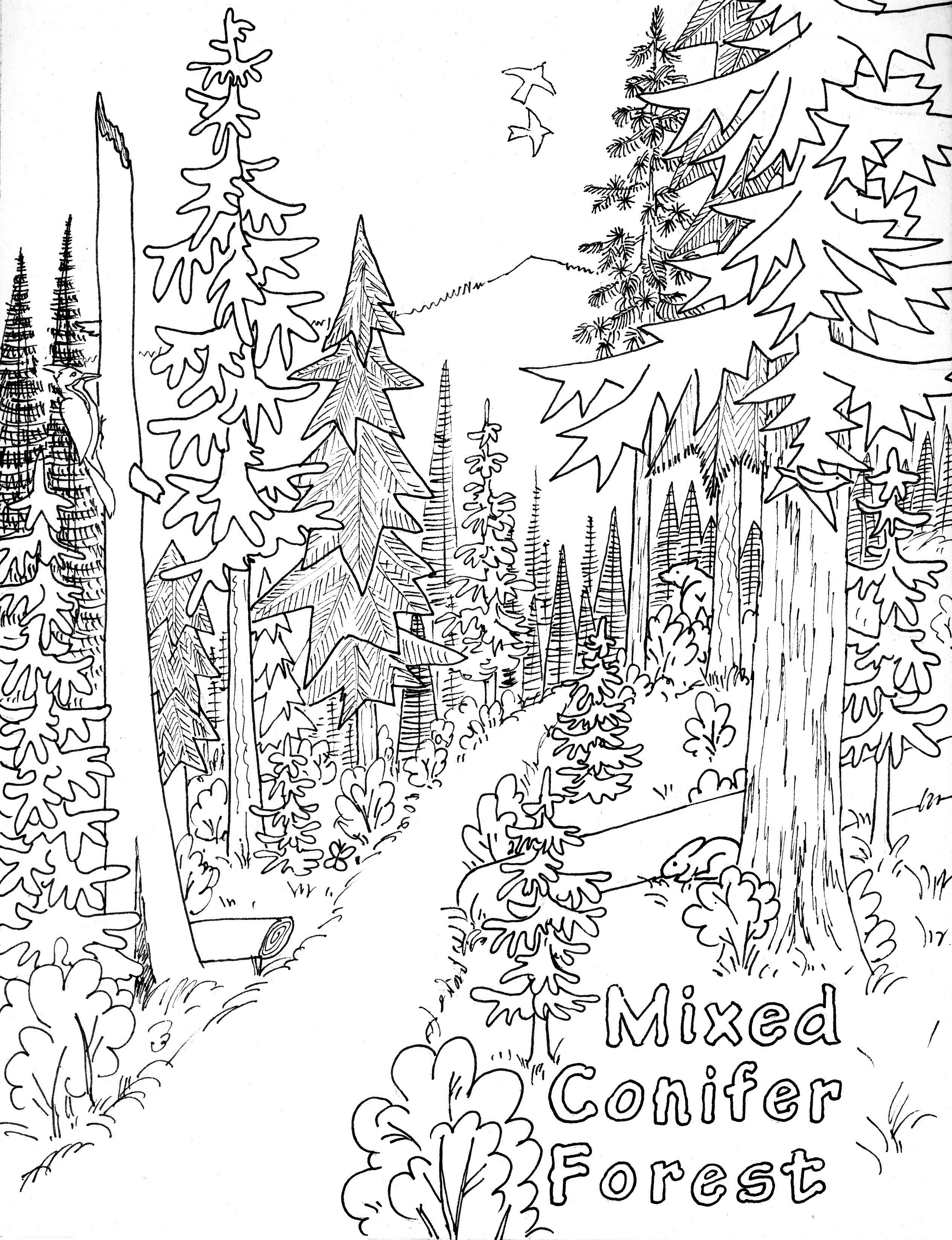 Free Printable Nature Coloring Pages For Kids   Nature Coloring - Free Printable Nature Coloring Pages