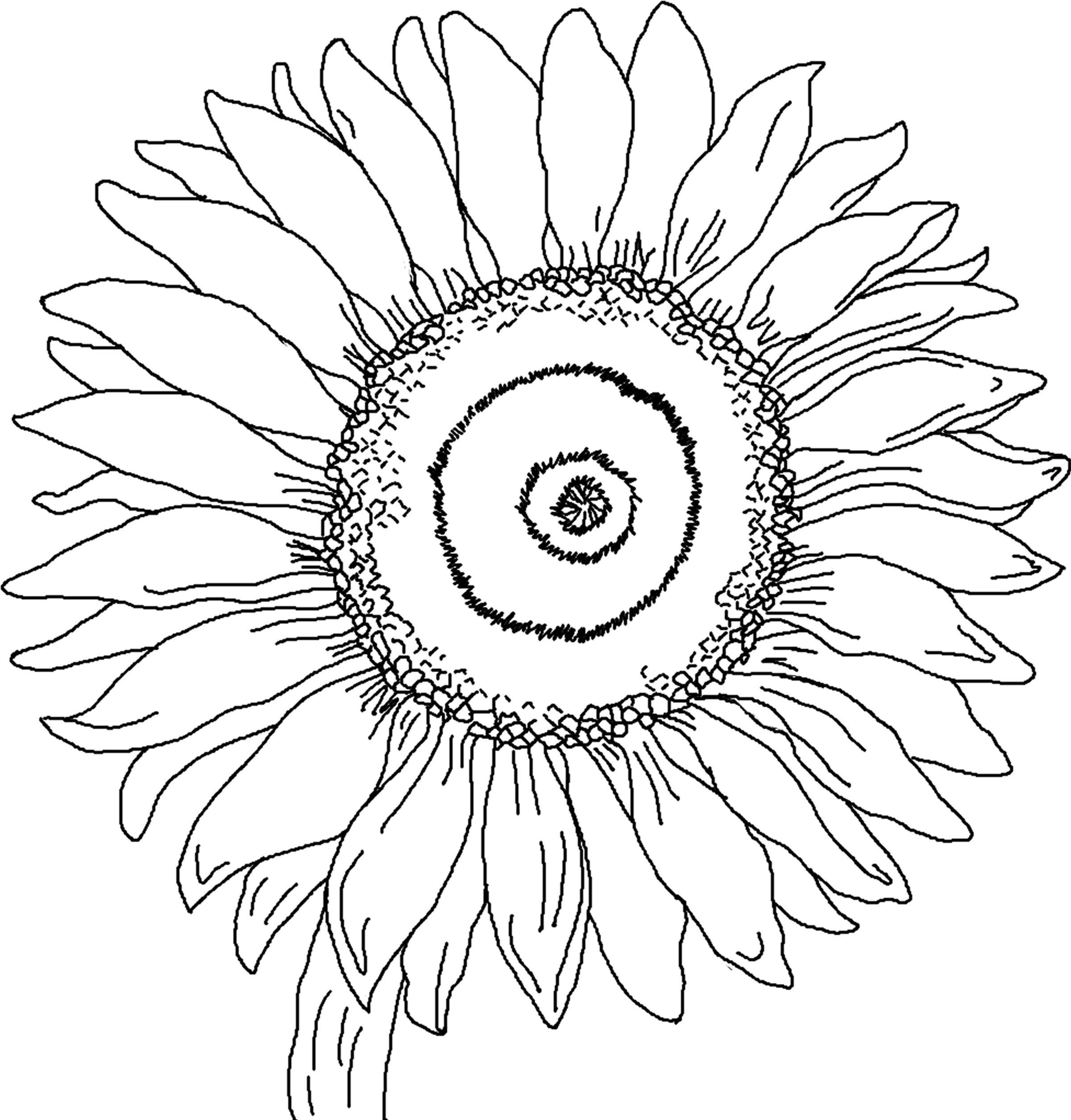 Free Printable Sunflower Coloring Pages For Kids   Auction Art - Free Printable Sunflower Template
