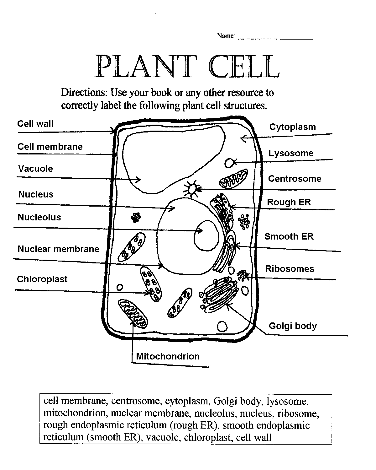 Pinjennifer Kodua On Science | Plant Cell Diagram, Science Cells - Free Printable Cell Worksheets