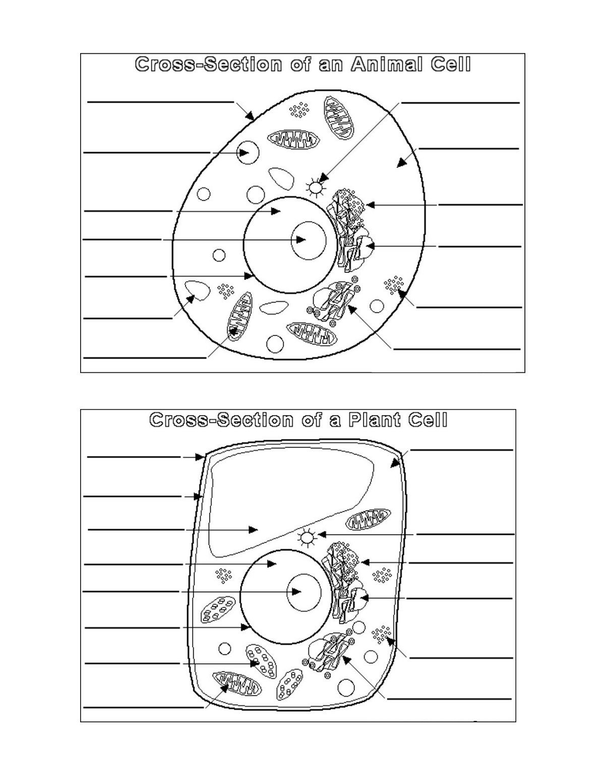 Plant And Animal Cell Diagram Blank | Printable Diagram | Printable - Free Printable Cell Worksheets