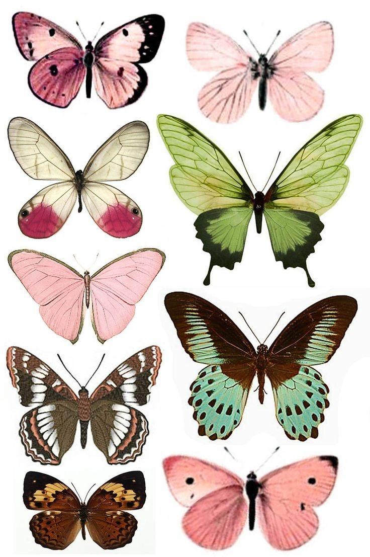 Shtampomaniya: Free Printables. Butterflies.   Butterflies - Free Printable Butterfly Pictures
