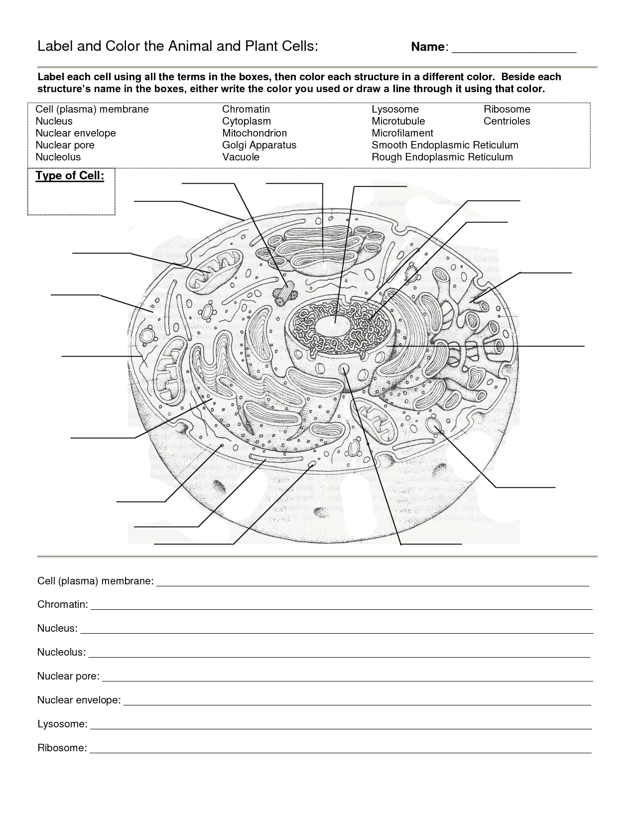 Worksheet : Animal Cell Coloring Animal Color Page Worksheet And - Free Printable Cell Worksheets