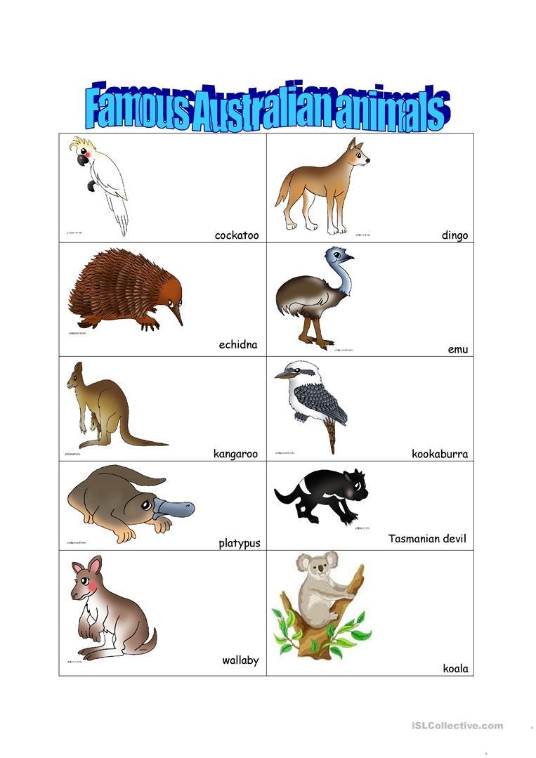 14 Free Esl Australian Animals Worksheets - Free Printable Australian Animals