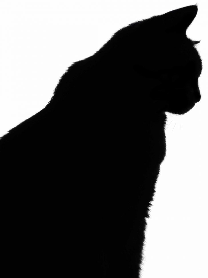 Free Printable Cat Silhouette