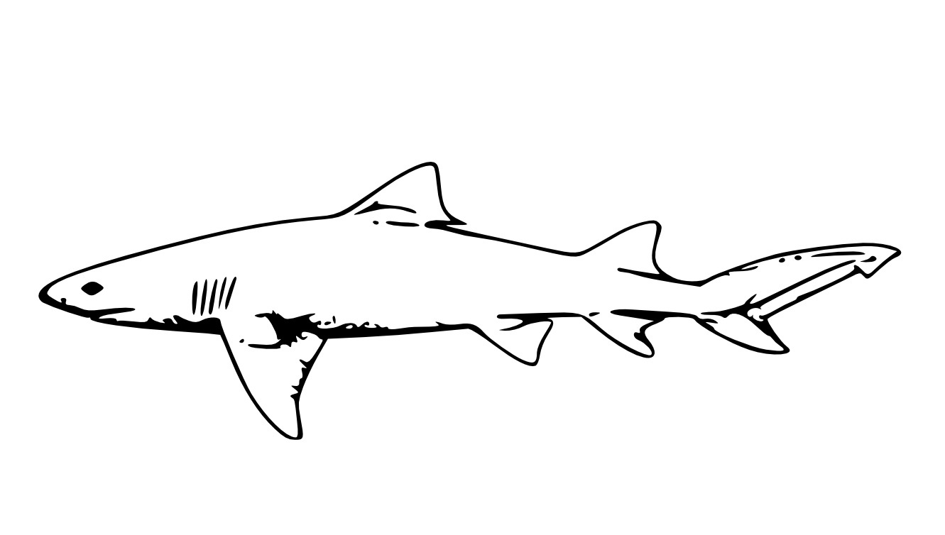 Free Printable Shark Coloring Pages For Kids - Free Printable Shark Coloring Pages